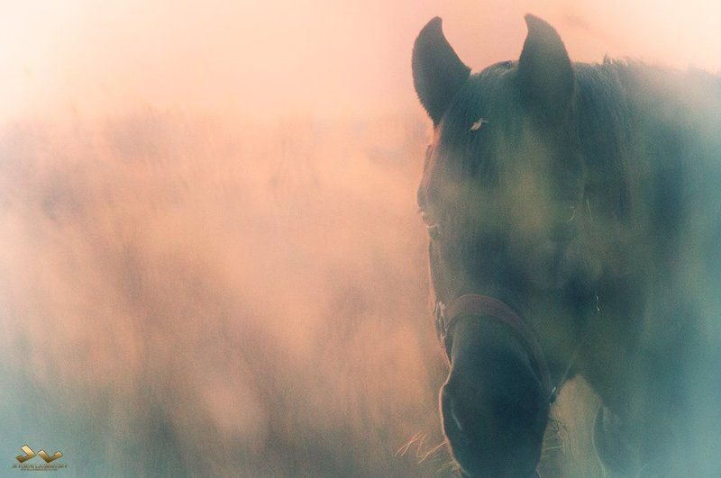 лошадь, hotse, mist, туман Horse in the mist photo preview