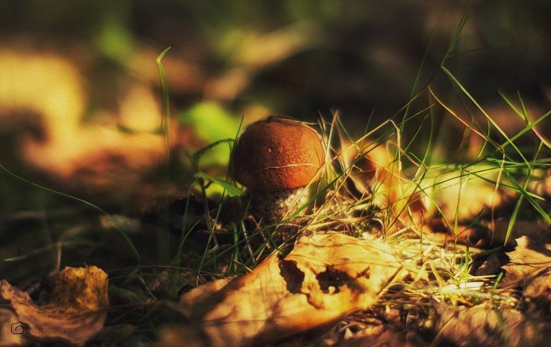 mushroom,nature,forest mushroom historyphoto preview