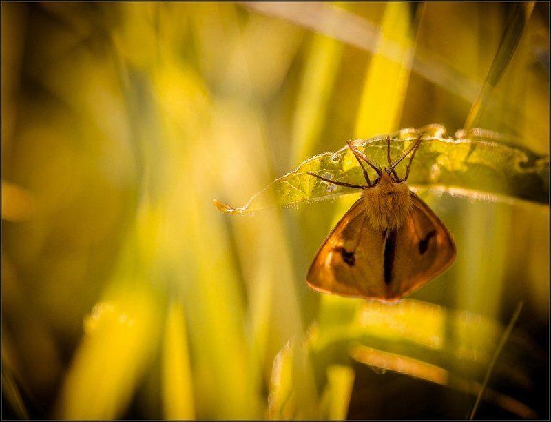 макро,природа Под листиком уютно и прохладноphoto preview