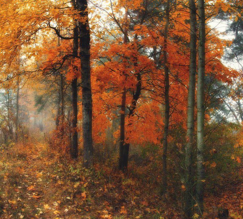 Осеннее настроение..photo preview