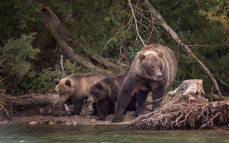Медведь, Камчатка В гостях у сказкиphoto preview