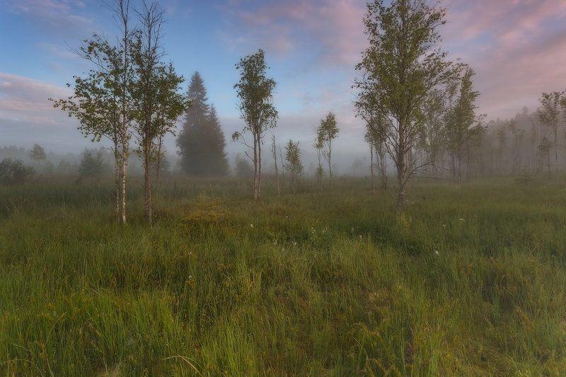 Landscape, Болото, Пейзаж, Питер, Туман Отцветал иван-чай. . .photo preview