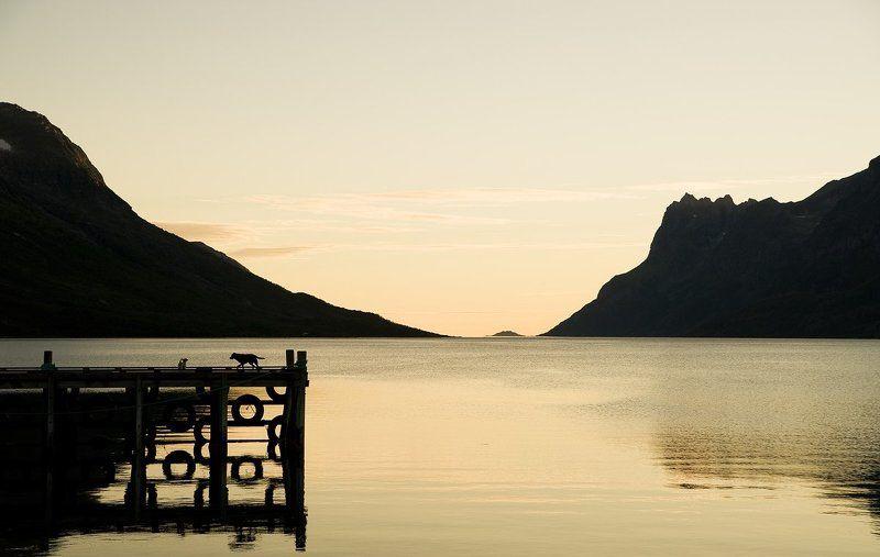 норвегия, море, горы, закат, фьорд Две маленькие собаки и огромный мир.photo preview