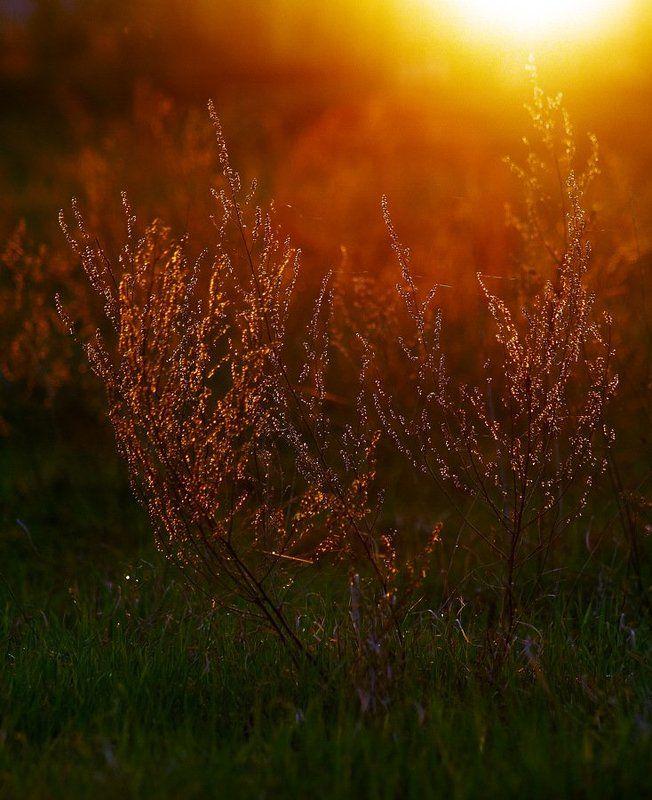 Закатный кустикphoto preview