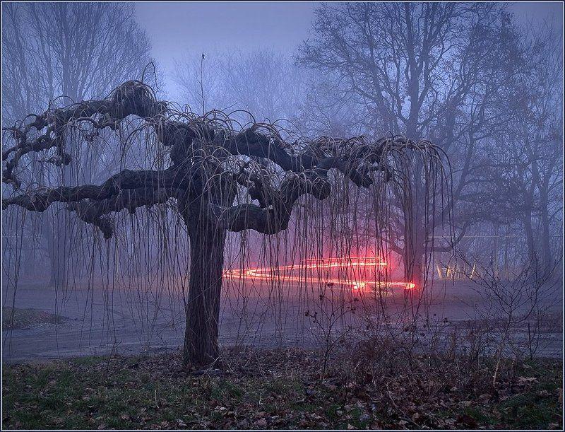 пейзаж, вечер, дерево, город, изгибы Вечерние изгибыphoto preview