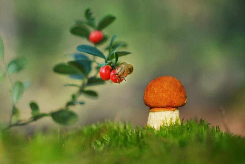 грибы, природа Вот растет такой грибокphoto preview