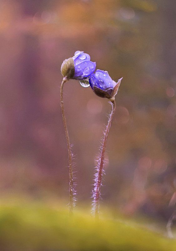цветы, природа Вдвоемphoto preview