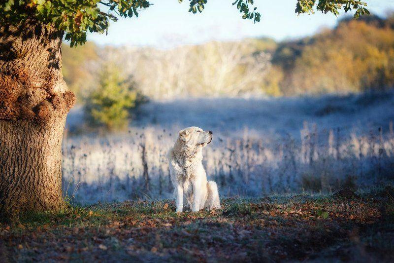 Памяти моей собакиphoto preview