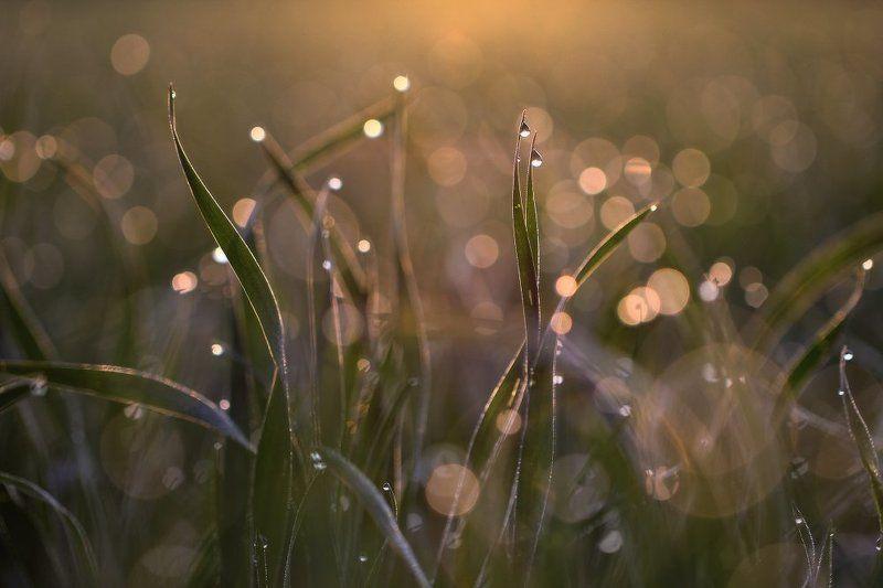 роса,капли,макро,утро Утренний этюдphoto preview