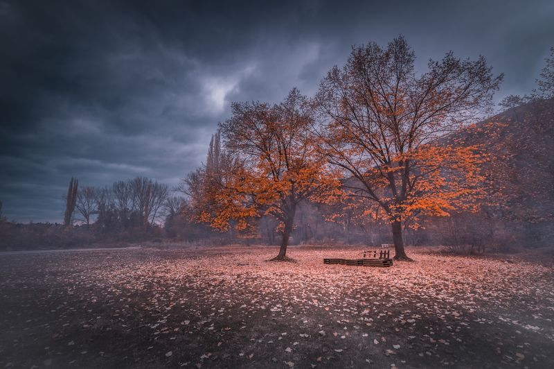 autumn, fall, landscape, trees, forest, woods, bulgaria, colors, nature, fog, mist, rain, october, sky, clouds Autumn Meetingphoto preview