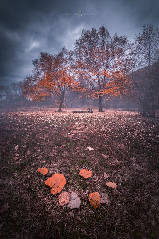 autumn, fall, landscape, trees, forest, woods, bulgaria, colors, nature, fog, mist, rain, october, sky, clouds Fall & Lovephoto preview