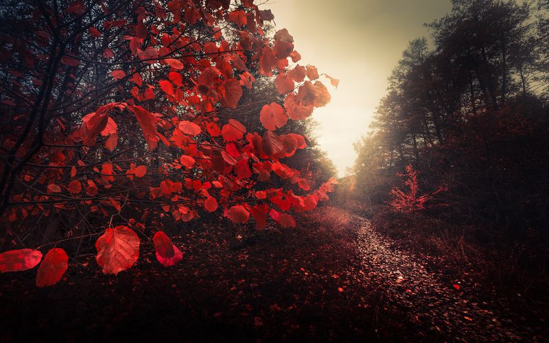 autumn, fall, landscape, trees, forest, woods, bulgaria, colors, nature, fog, mist, rain, october, red, leaves, fairytale Woodland Talesphoto preview