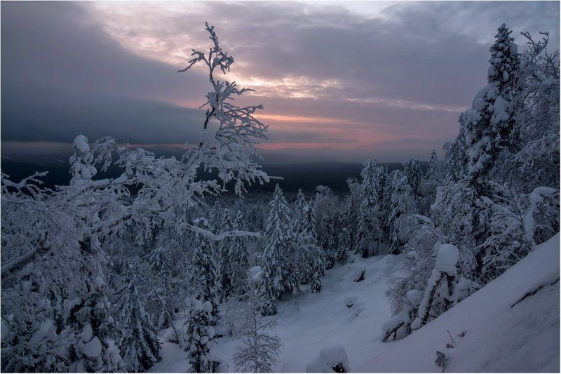 рассвет, скалы,деревья, снег Хмурый рассвет...photo preview
