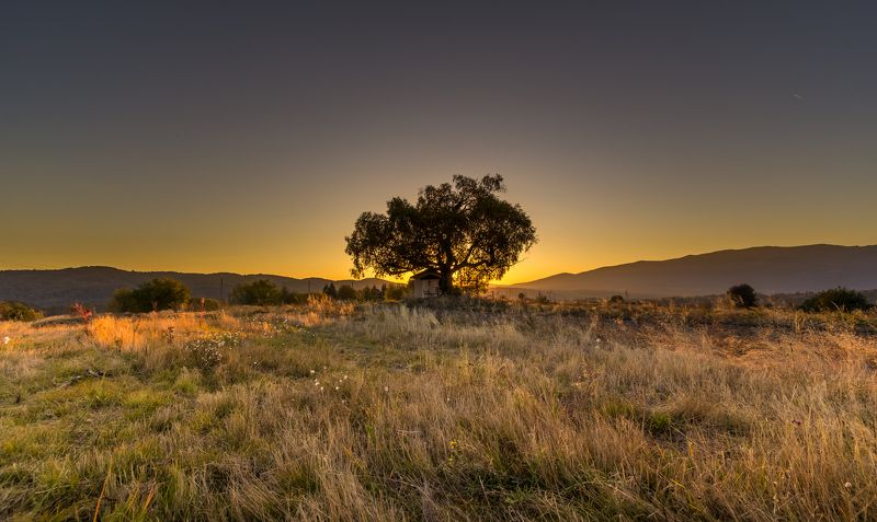 landscape, autumn, summer, field, clouds, sky, rays, sunrays, bulgaria, nature, tree, sunset, plana, mountain, st. cyprian Tree of Lifephoto preview