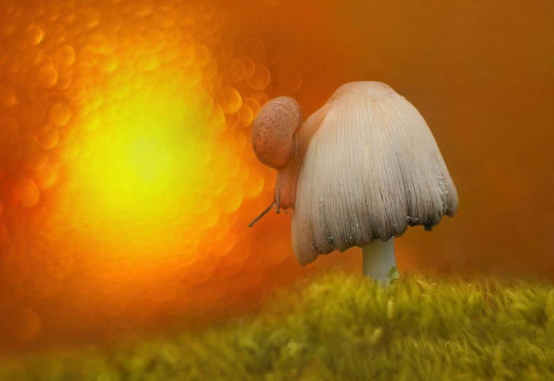 грибы, природа Приснился улитке чудеснейший сон, как будто бежала она марафон...photo preview