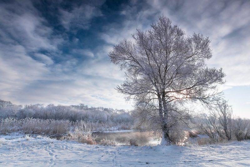 Frozen treephoto preview