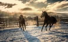 резвые кони