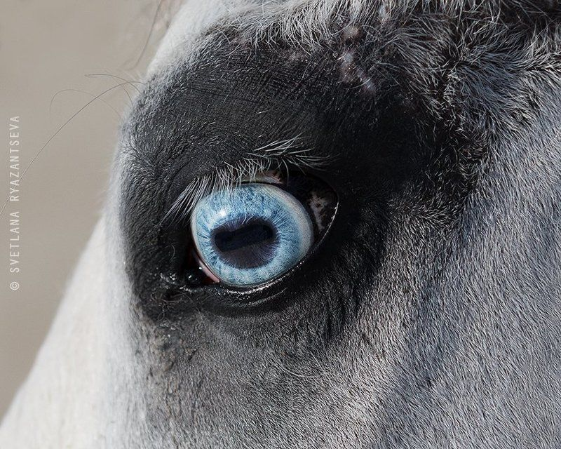 horse, head, detail, eye, blue, лошадь, глаза, взгляд Зеркало душиphoto preview