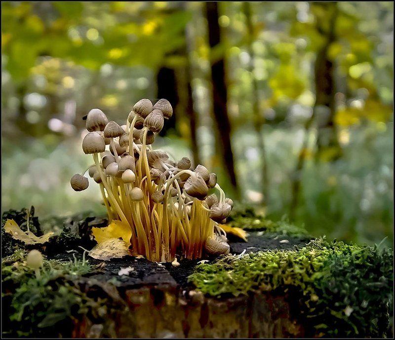природа, грибы, лес Увядающие на пнеphoto preview