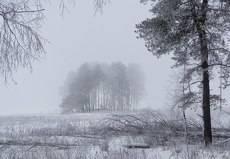 утренний морозный туман