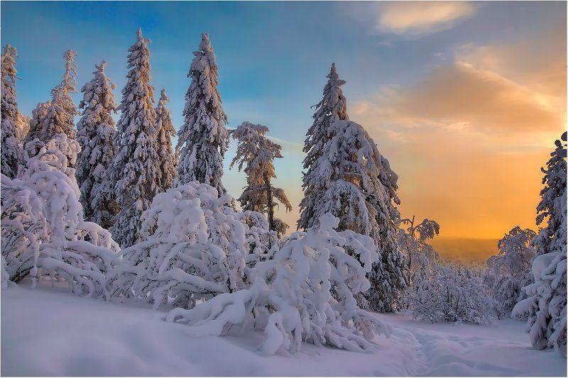 закат,снег,деревья. Рождественский сочельник...photo preview