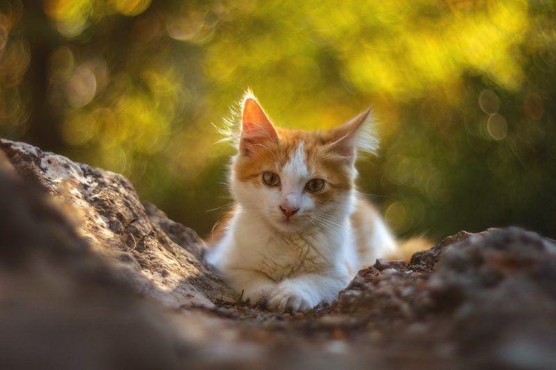 животные, изумруд, кошка, кошки, крым, севастополь Южнобережная братваphoto preview