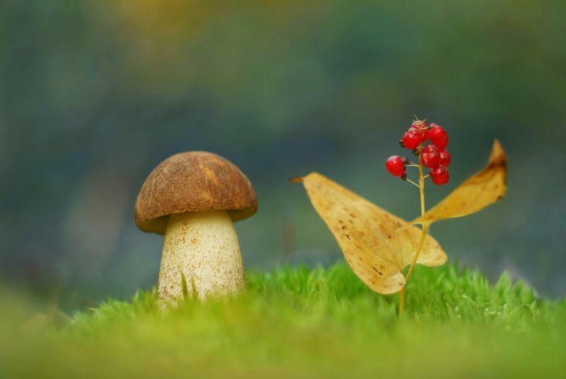 грибы, природа Гриб, как гриб...photo preview
