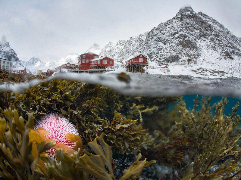 norway, lofoten, норвегия, лофотены Вид из под воды на зимние Лофотеныphoto preview