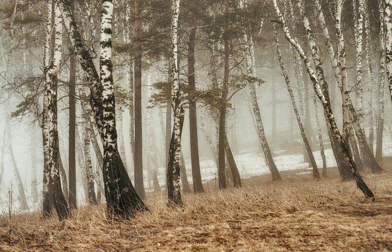 Туманная весна.photo preview
