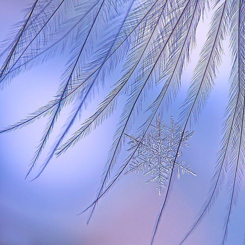 снежинка, снег, макро, кристалл, снег, зима, природа Зимний артphoto preview
