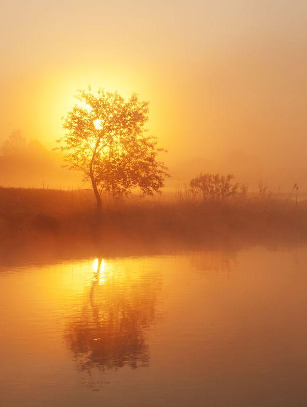 рассвет, туман, природа Горячее утроphoto preview