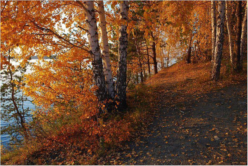осень,берег,берёзы Золотые осени мгновения...photo preview
