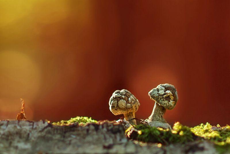 грибы, природа Выжившиеphoto preview