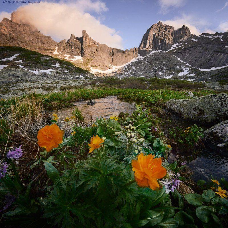 красноярский край, западные саяны, национальный парк  ергаки, перевал, горы, птица, цветы, жарки, ручей. \