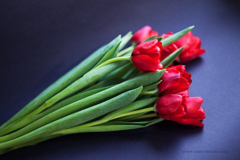 цветы, синий, красный, зеленый, тюльпаны, натюрморт, цвет, свет, фото, фотография, photo, photography, nature, still life, light, red, blue, green, flower, flowers, tulips Тюльпаныphoto preview