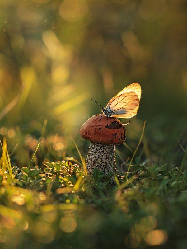 подосиновик, бабочка, якутия, Украшение для подосиновикаphoto preview