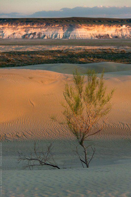 пейзаж, пустыня, песок, закат, дерево, плоскогорье, свет, Мангистау, Мангышлак, Устюрт, landscape, Mangistau, Mangyshlak, Ustyurt Вариации / Variationsphoto preview