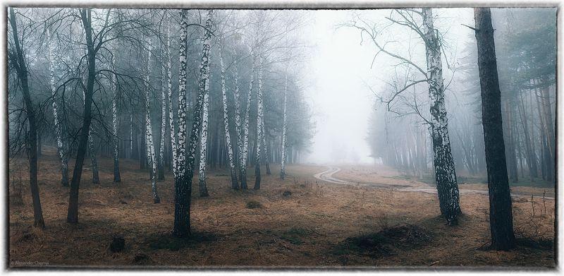 украина, коростышев, весна, лес, туман, береза, Весна таинственных туманов...photo preview