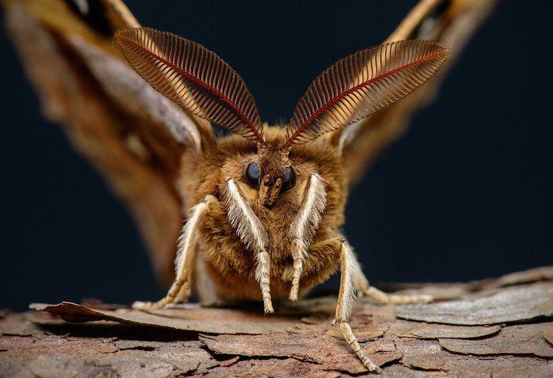 макро, байкал, прибайкалье, муравей, бабочка, багульник, цветение Микромир Байкала, часть 1photo preview