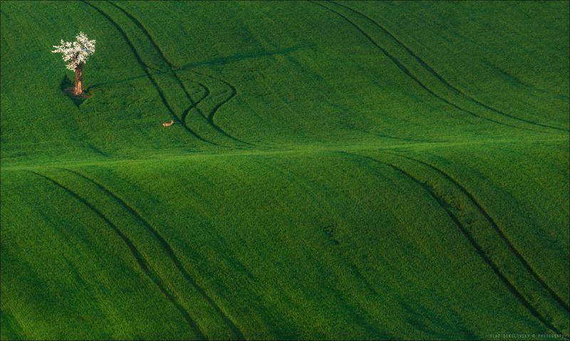 Чехия, Южная Моравия, весна, фототур, landscape, South Moravian, Состояние весны ..photo preview
