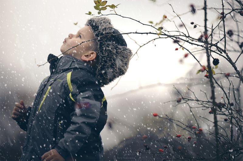 Зима и ягоды..photo preview