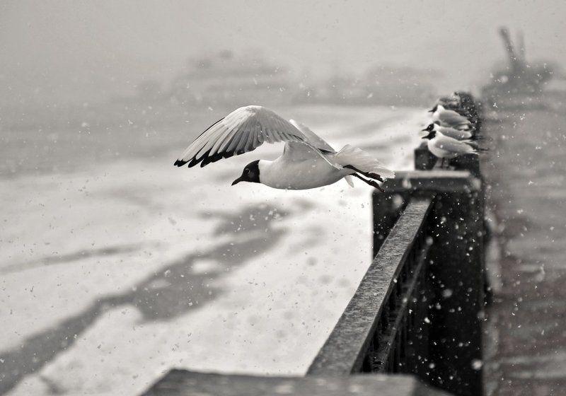 чайка, выборг В одиночку против буриphoto preview