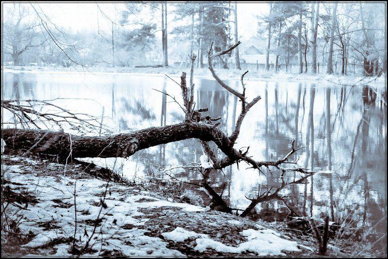 ч/б,природа Завал на берегуphoto preview