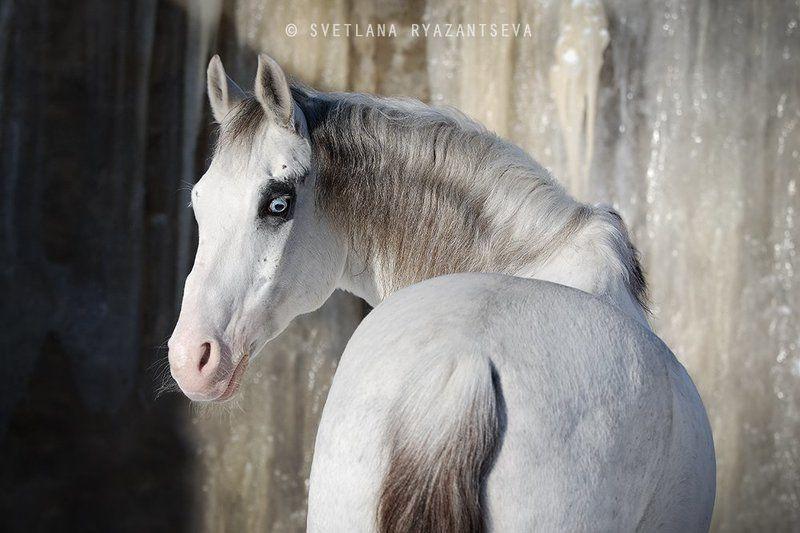 horse, white, grey, portrait, pinto, лошадь, серая, белая, портрет Зефирphoto preview