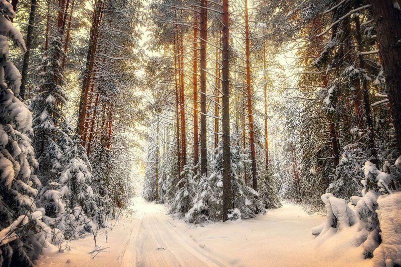 снег, зима, лес, дорога, холод, свет, деревья, пейзаж На распутье.photo preview
