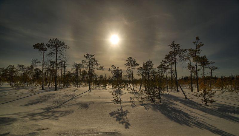 полярный полденьphoto preview