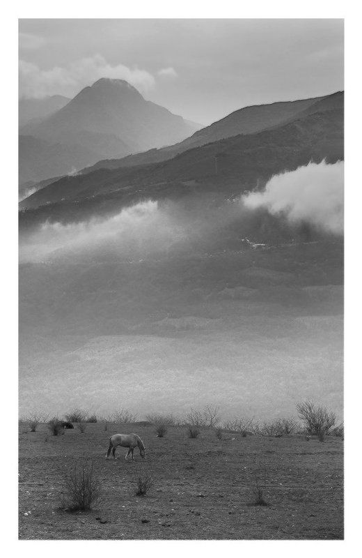 Лошадка под облаками...photo preview