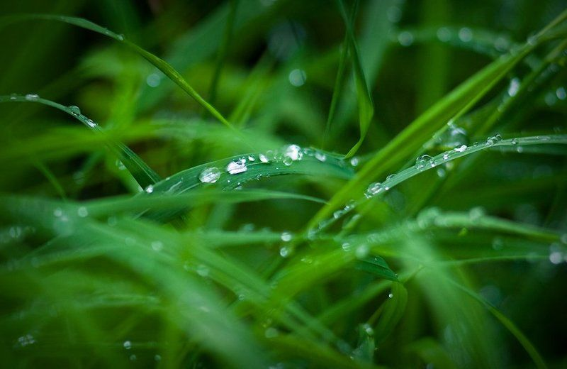 капельки, роса, трава, дождинки, вода просто дождь прошёлphoto preview