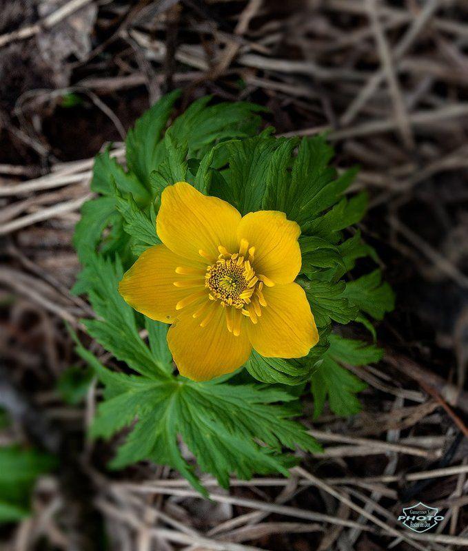 Вестник весны в горах Кавказаphoto preview