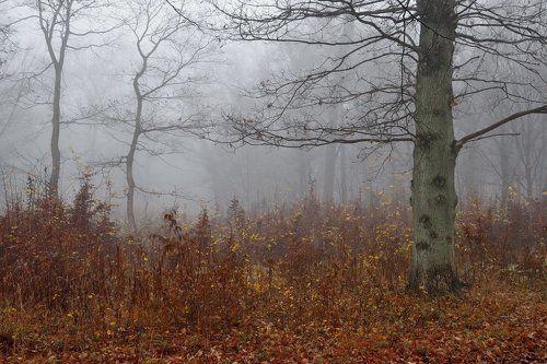 Туман ноября